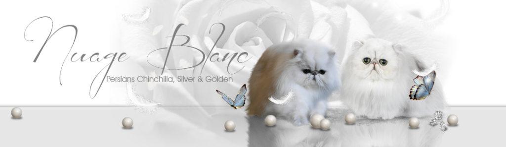 banner-nuage-blanc