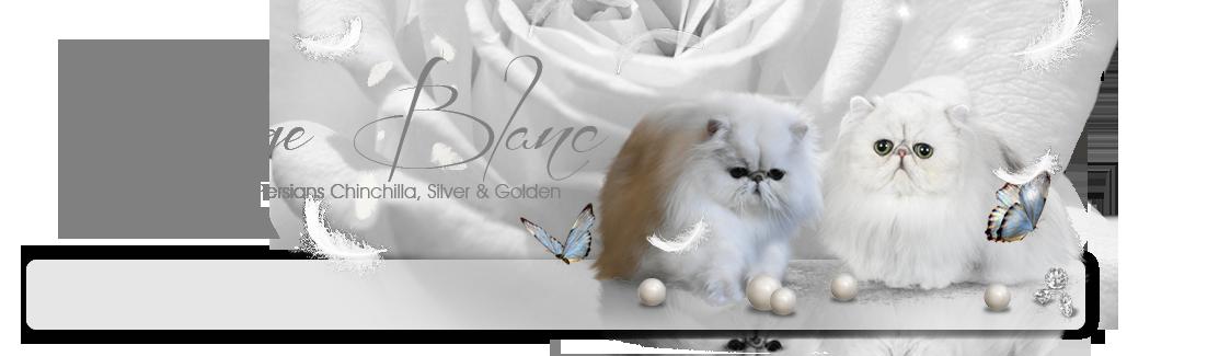 Nuage Blanc